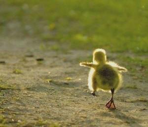 small-steps bird